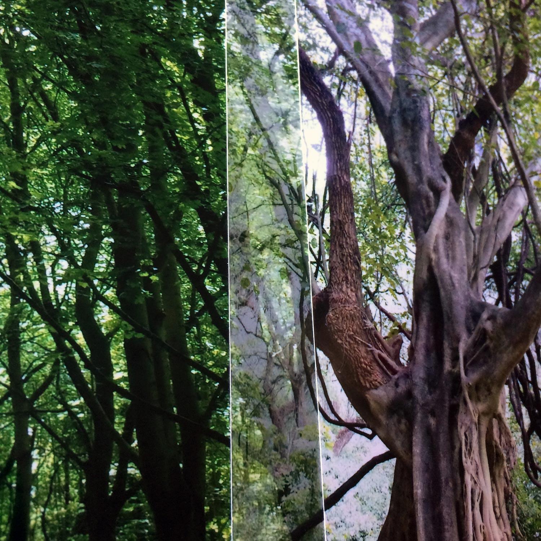 quai de l'arbre aligné - em pinsan